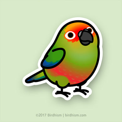Chubby Gold-capped Conure Stickers