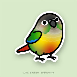 Chubby Yellow-sided Green Cheek Conure Stickers