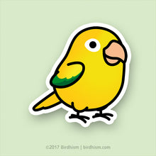 Chubby Golden Conure Stickers