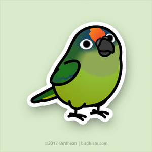 Chubby Peach-fronted Conure Stickers