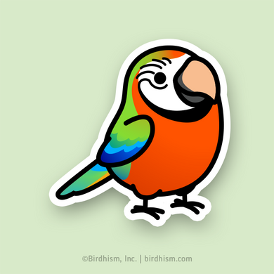 BACK ORDERED: Chubby Harlequin Macaw Stickers
