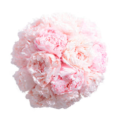 Peony Dome - Lasts Up To One Year