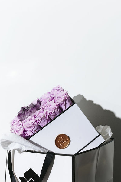 Amethyst - Crystal Collection