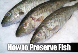How to preserve your fish