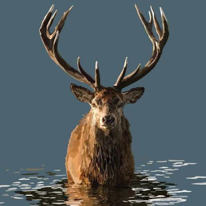 Angus Robertson Stag in water greeting card, The Scottish Company