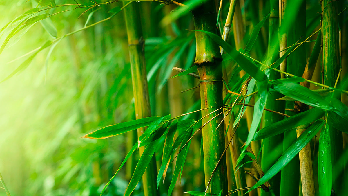 ... Bamboo? How & Why of processing