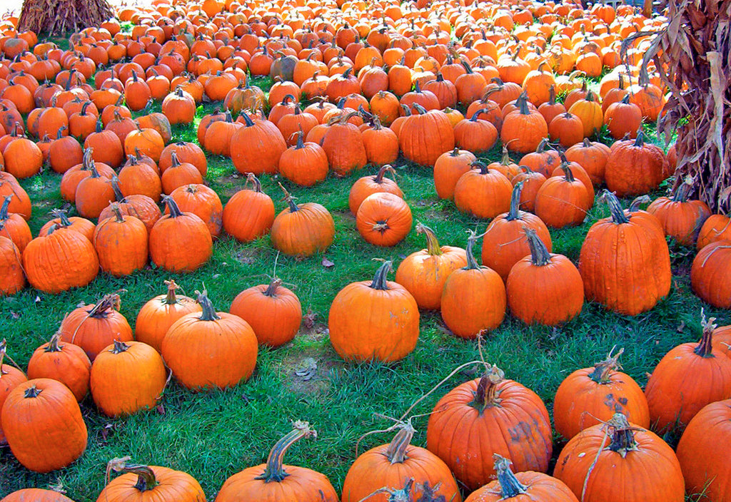 How healthy are pumpkins?