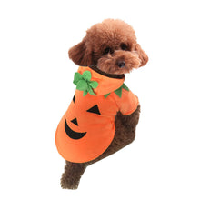 HEY PUMPKIN DOG COSTUME
