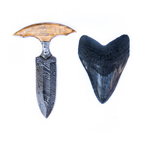 Shark Tooth Knife- High Carbon Damascus Steel- Wood Handle