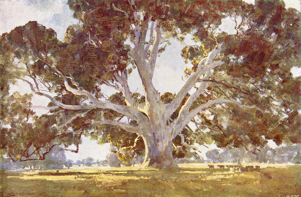 The Red Gum Tree by Arthur Streeton 1920's
