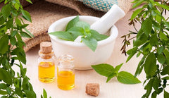 Organic Essential Oil of Peppermint