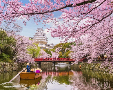 Boat Ride under Sakura in Japan