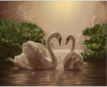 Two swans in water - DIY Paint By Numbers Kits for Adults