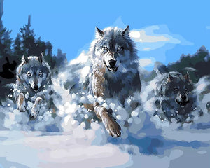 Wolves running in snow