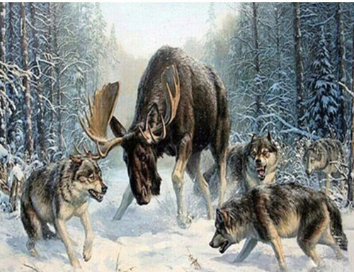 Moose and Wolves in snow