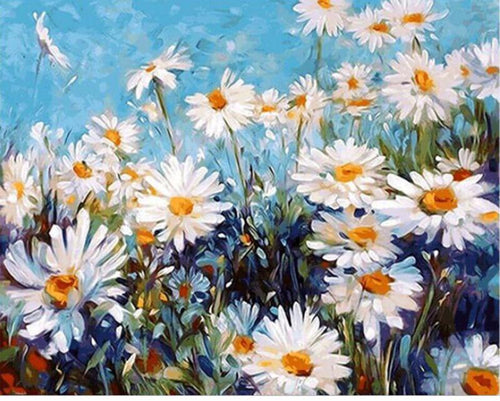 White field of daisies