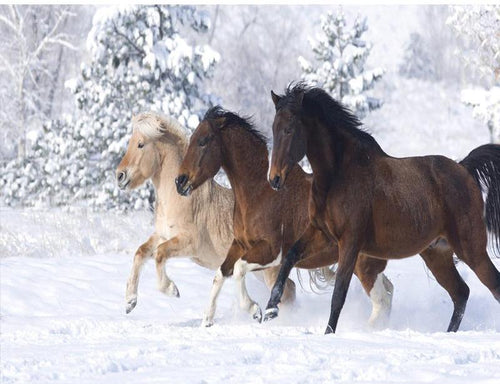 Shades of Horses in the snow