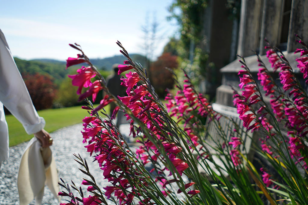 HOTEL ENDSLEIGH: SPRING BLOOM