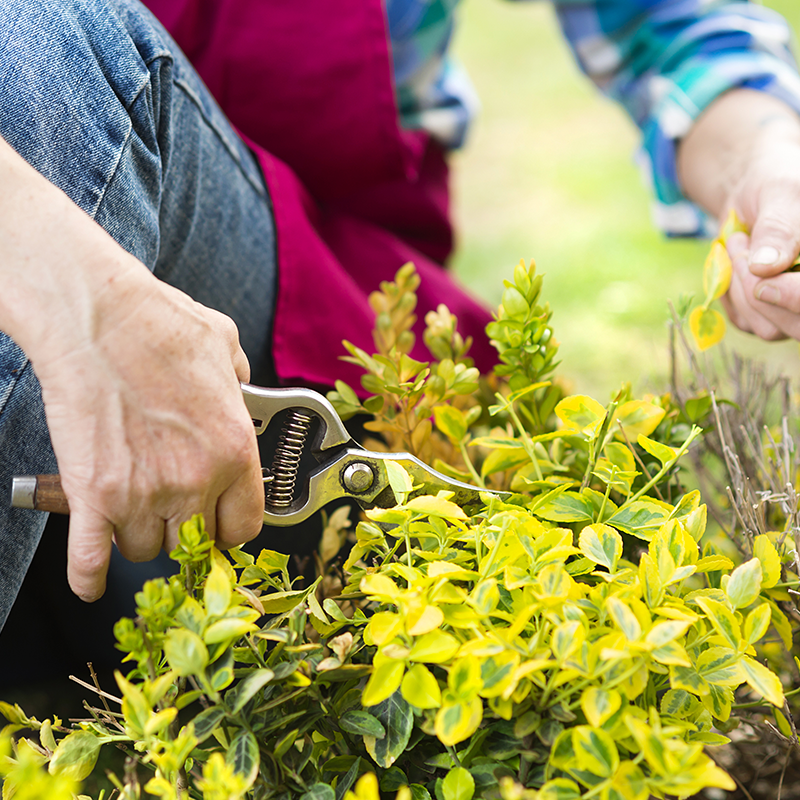 April Gardening Jobs - What to Do in the Garden This Month
