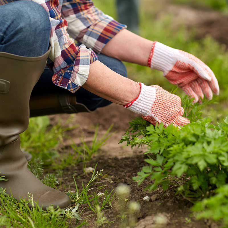 What to Do in the Garden in June - Weeding