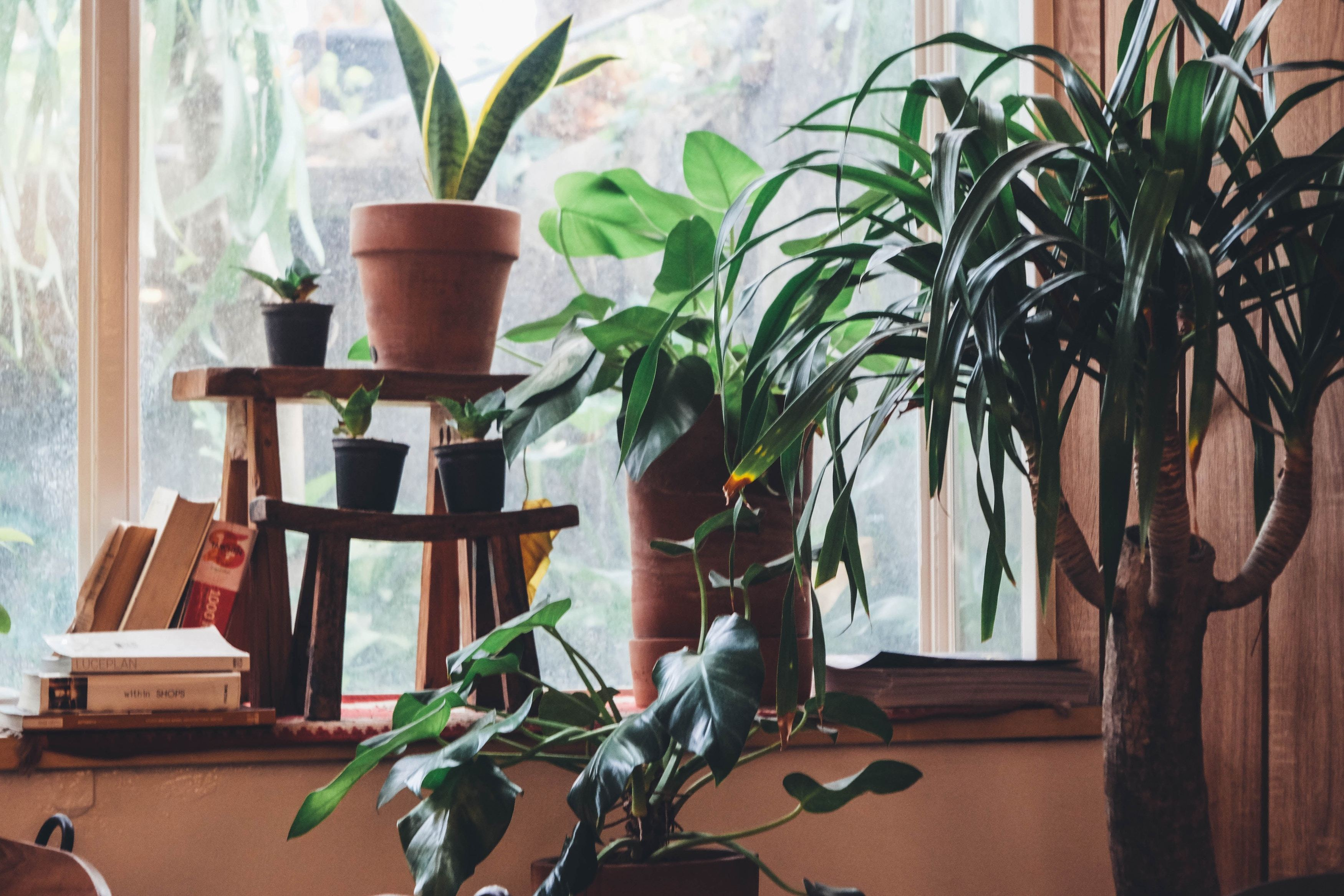 Your Green Thumb Revival: How to Pick The Best Houseplants