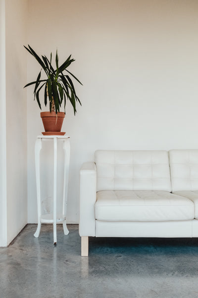 Pot Plant on White Plant Stand With White Couch
