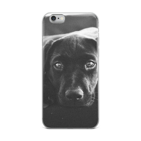 Labrador Stare iPhone Case