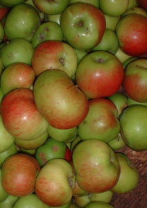 Apples - Cooking Bramley (bag of 8)