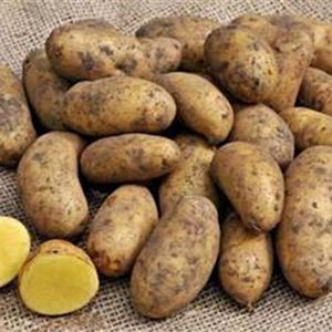 Potatoes - Golden Wonder