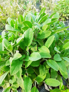 Ballyholey Farm Sage (50g)