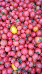 Tomatoes - Cherry Red