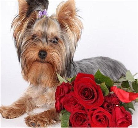 Cute Yorkshire Terrier Dog Wall Stickers