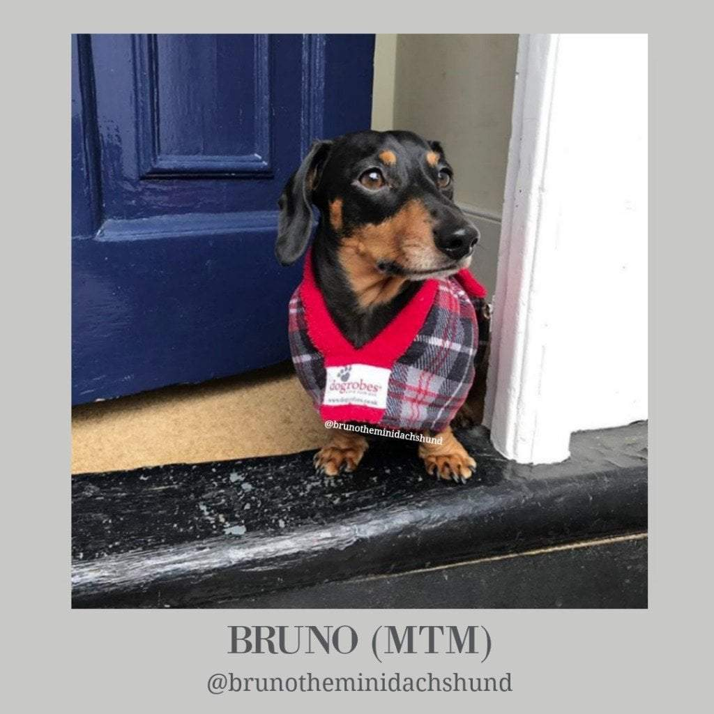 Bruno The Mini Dachshund - Dogrobes UK