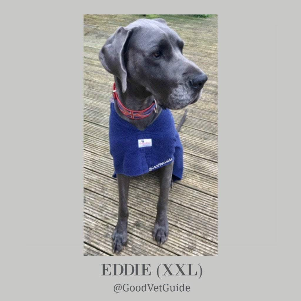 Eddie the Great Dane from Good Vet and Pet Guide - Dogrobes UK