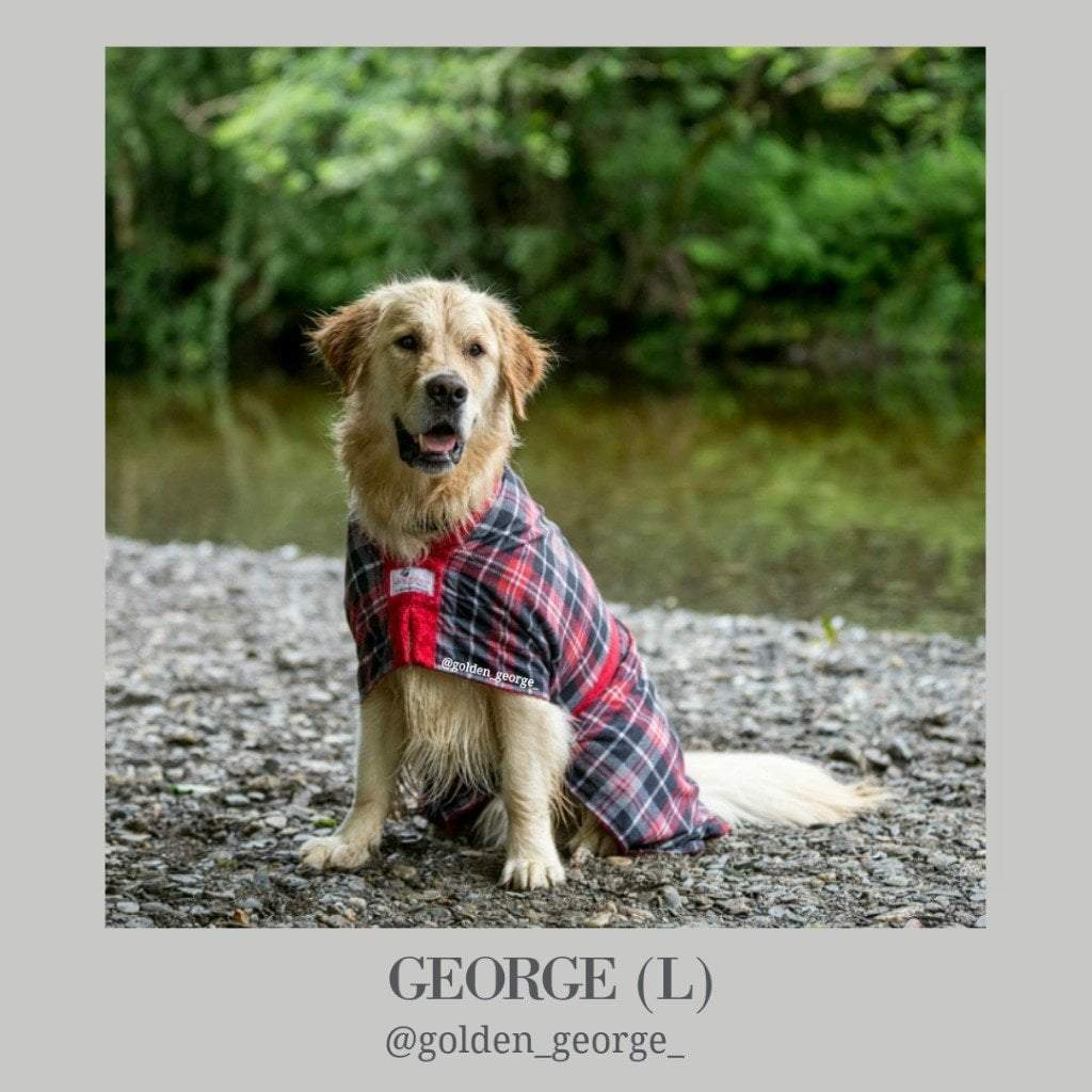 Golden George the Golden Retriever - Dogrobes UK