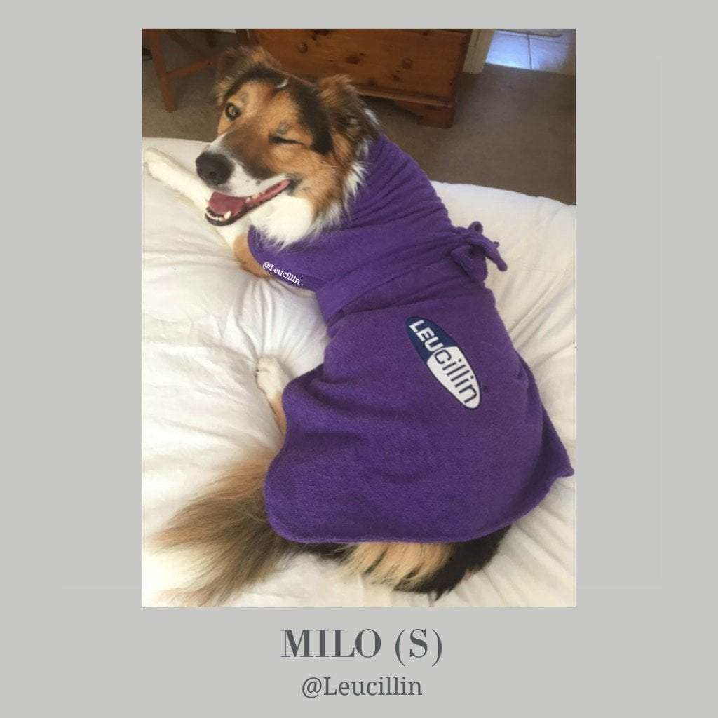 Milo the Border Collie from Leucillin - Dogrobes UK