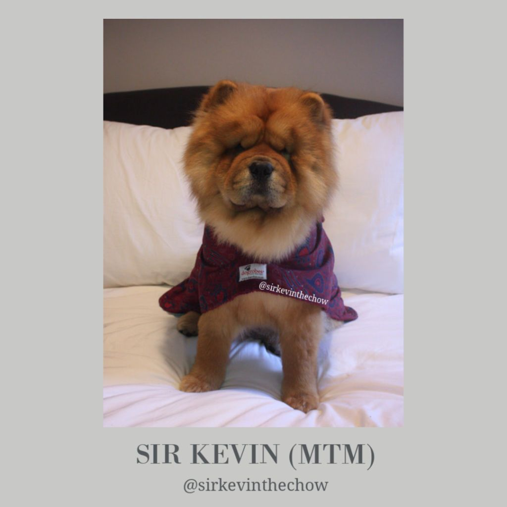 Sir Kevin The Chow - Dogrobes UK