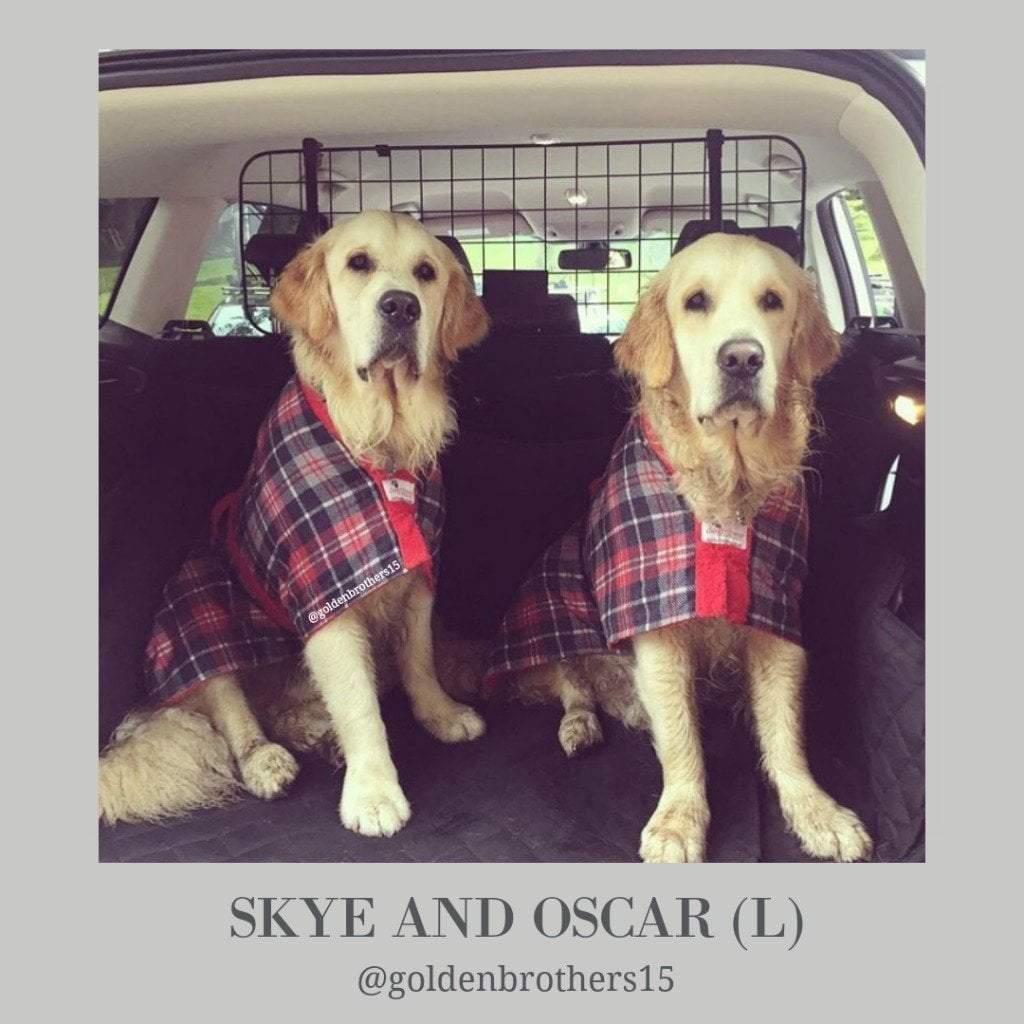 Skye and Oscar Golden Retrievers as Golden Brothers - Dogrobes UK