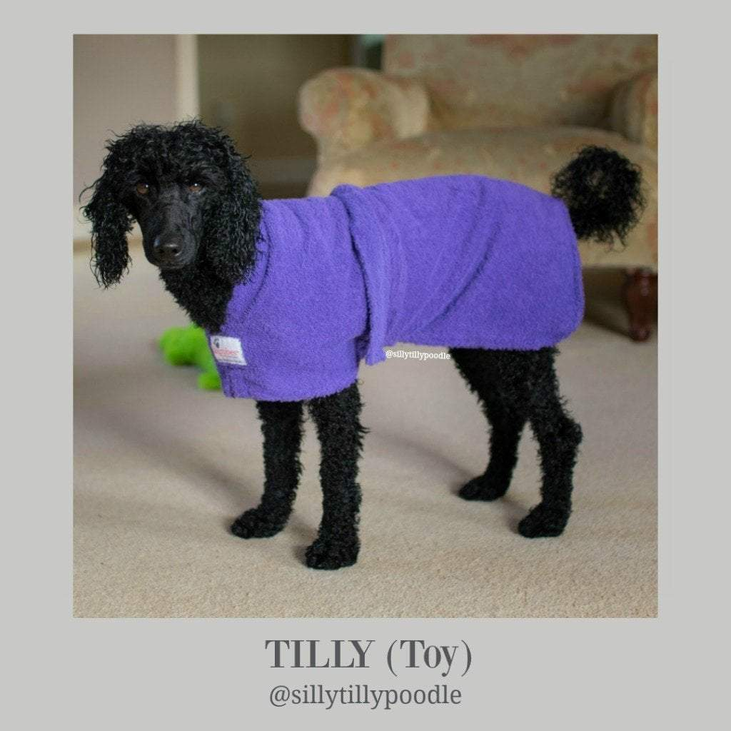 Tilly from Silly Tilly Poodle Miniature Poodle - Dogrobes UK
