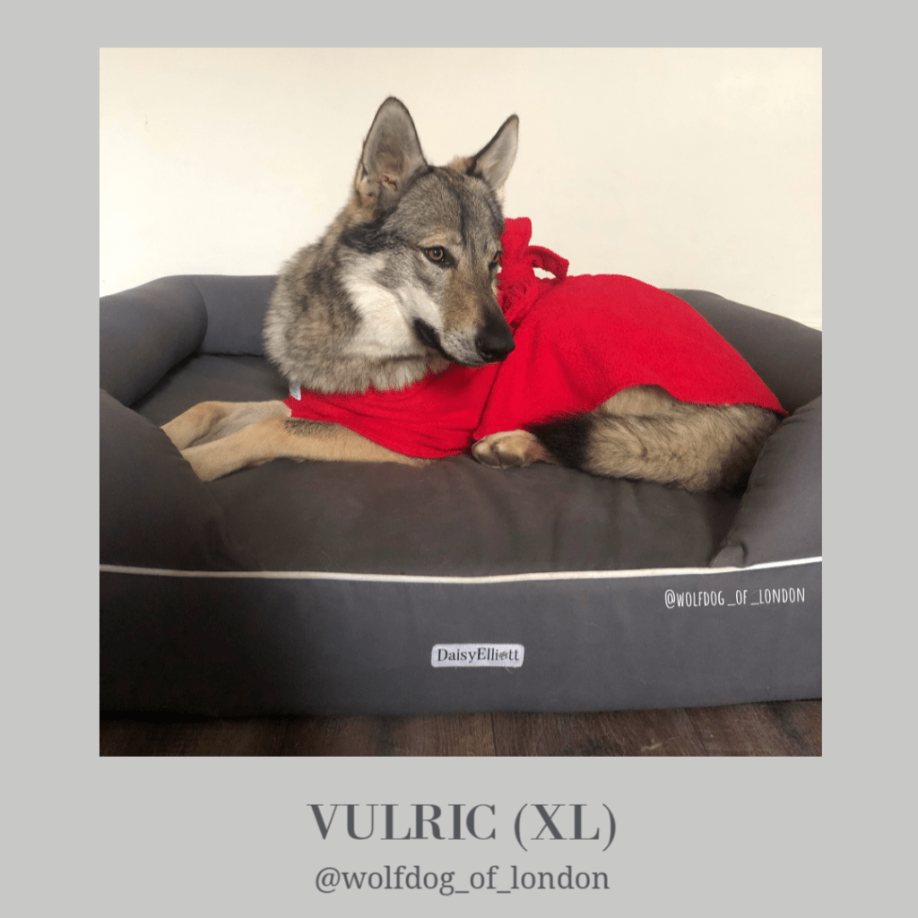 Vulric Wolfdog Of London - Dogrobes UK