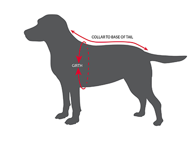 How To Measure Your Dog For A Dogrobe