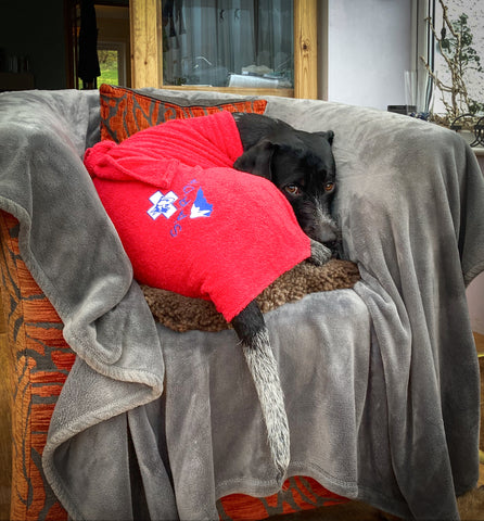 SARDA Cridhe in Dog Drying Coat after a rescue mission