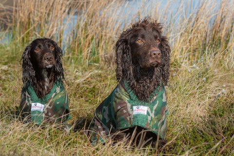 Cocker Spaniels wearing Camouflage Gun Dog Drying Coats