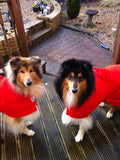 Sheepdogs Wearing Red Dogrobes