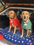 Red Labradors Wearing Red and Green Dogrobes
