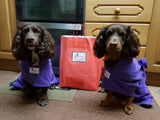 Spaniels Wearing Purple Dogrobes