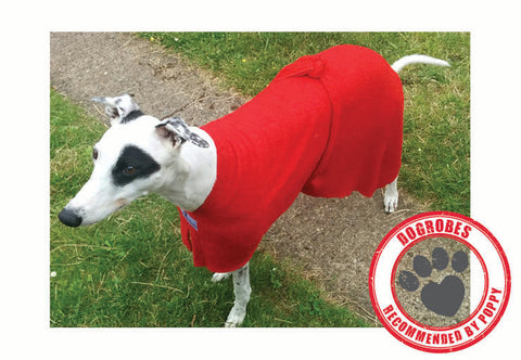 Greyhound Wearing Red Dogrobe
