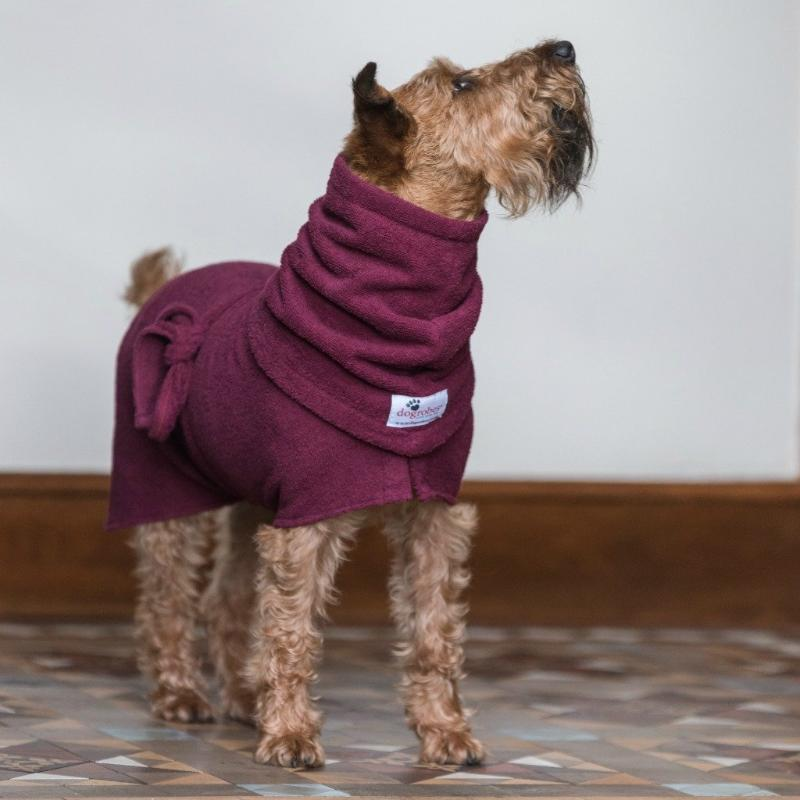 Irish Terrier Wearing Burgundy Dogrobe and Snood