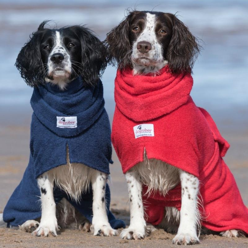 Springer Spaniels Wearing Navy and Red Snoods and Dogrobes