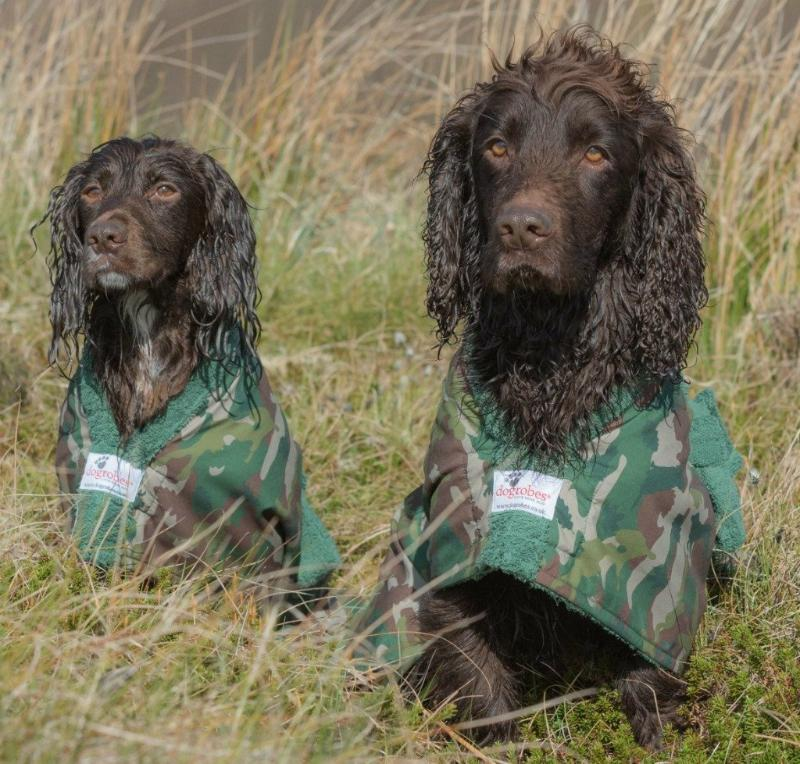 Two Cocker Spaniels Wearing Camouflage Dogrobes